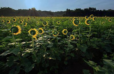 Photograph - Sun Flower Light by Art Cole