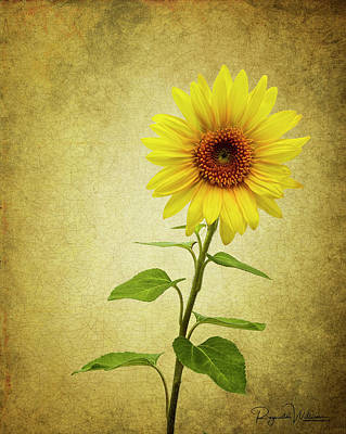 Photograph - Sun Flower by Reynaldo Williams