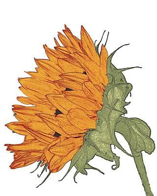 Digital Art - Sun Flower Study by I'ina Van Lawick