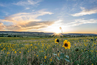 Feild Photograph - Sun Flower Sunset by Hudson Marsh