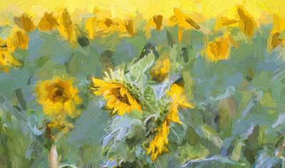 Photograph - Sun Flowers by Deb Buchanan