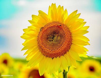 Photograph - Sun Flowers by LeeAnn McLaneGoetz McLaneGoetzStudioLLCcom
