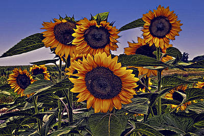 Photograph - Sun Flowers by Maria Coulson