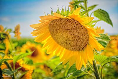 Photograph - Sun Flowers Thoughts by LeeAnn McLaneGoetz McLaneGoetzStudioLLCcom
