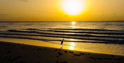 Modern Man Surf - Sun gazing  by Daphney Antoine