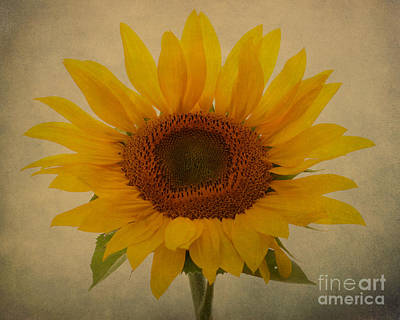 Photograph - Sun Giant by Heather King