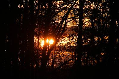 Photograph - Sun Going Down In The Trees by Kathryn Meyer