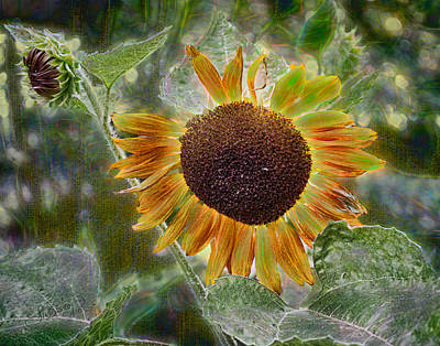 Photograph - Sun In A Flower by Larry Bishop