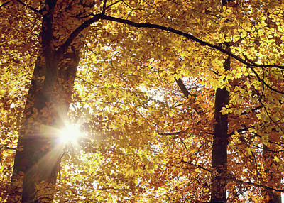 Susann Serfezi Photograph - Sun In Fall by AugenWerk Susann Serfezi