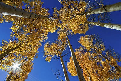 Photograph - Sun In The Aspens by Stuart Litoff
