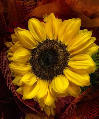 Sun In The Flower Art Print by Arlene Carmel