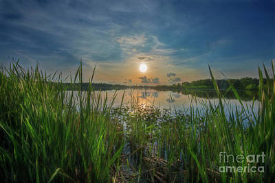 Photograph - Sun In The Reeds by David Arment