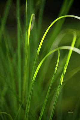 Photograph - Sun Kissed Grass by Christina Rollo