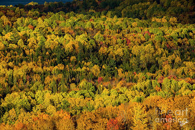 Photograph - Sun Lighting Up Fall Trees by Alana Ranney