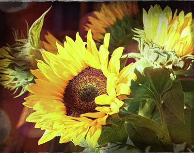 Photograph - Sun Of The Flower by Michael Hope