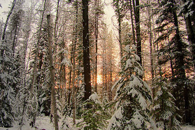 Photograph - Sun Of Winter Trees by Troy Stapek