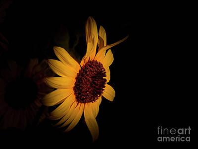Photograph - Sun On My Face Sunflower by Deniece Platt