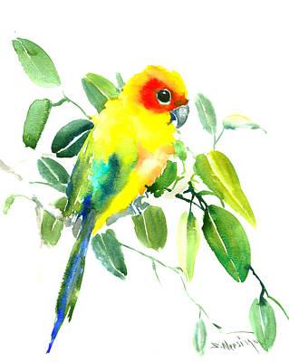 Parakeet Drawing - Sun Parakeet by Suren Nersisyan