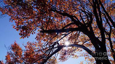 Photograph - Sun Peaking Threw by Debra Crank