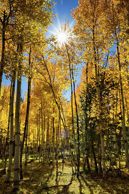 Photograph - Sun Peaking Through The Aspens  by Saija Lehtonen