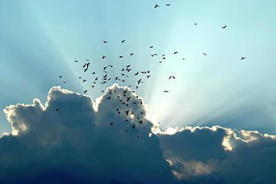Art Print featuring the photograph Sun Ray Aerobatics Blue Sky by Carolyn Marshall
