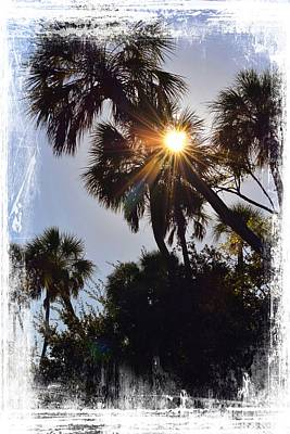 Photograph - Sun Ray Palms by Sheri McLeroy