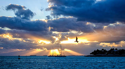 Photograph - Sun Rays And Seagull 2 by John McArthur
