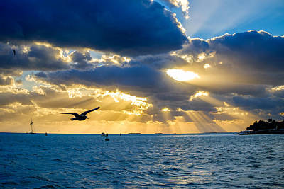Photograph - Sun Rays And Seagull by John McArthur