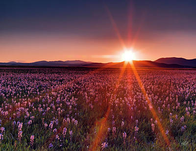 Sun Rays Photograph - Sun Rays At Camas Prairie by Leland D Howard