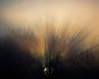 Sun Rays In The Fog Art Print