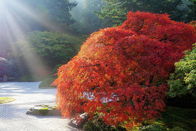 Wall Art - Photograph - Sun Rays Over Old Japanese Maple Tree by David Gn