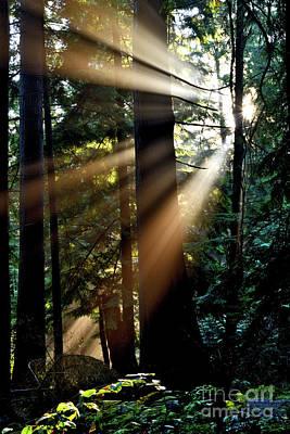 Photograph - Sun Rays Through The Trees 2 by Terry Elniski