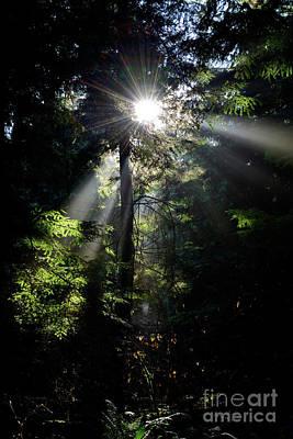 Photograph - Sun Rays Through The Trees 3 by Terry Elniski