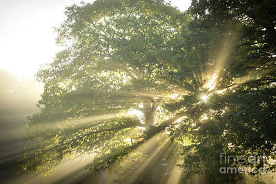Photograph - Sun Rays Through The Trees by Alana Ranney