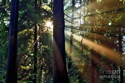 Photograph - Sun Rays Through The Trees by Terry Elniski