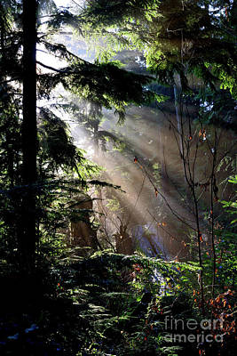 Photograph - Sun Rays Through Trees 4 by Terry Elniski