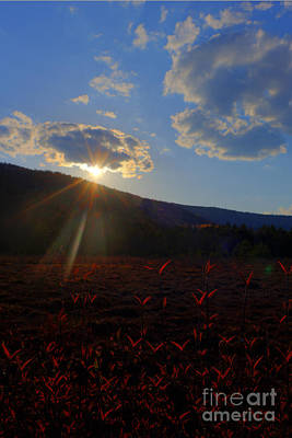 Photograph - Sun Setting At Cranberry Glades by Dan Friend