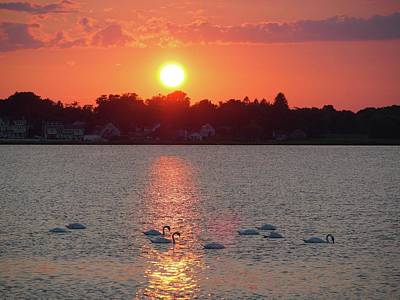 Photograph - Sun Setting Swans by Patricia McKay