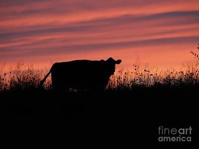 Photograph - Sun Shadowa Silhouette by Scott B Bennett