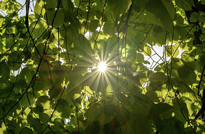 Photograph - Sun Shines Through The Leaves by Jacek Wojnarowski