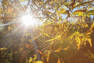 Photograph - Sun Shining In Portland by Kunal Mehra
