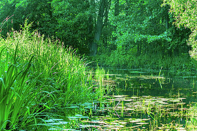 Photograph - Sun Shining In The Spreewald by Sun Travels