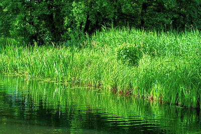 Photograph - Sun Shining On Green Grass In The Spreewald by Sun Travels