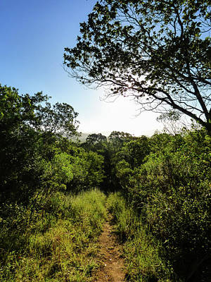 Photograph - Sun Shining Over A Hiking Path In The Atlantic Forest by Helissa Grundemann
