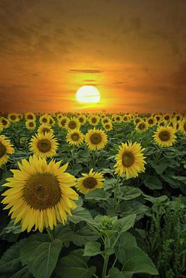 Photograph - Sun-shiny Day by Aaron J Groen