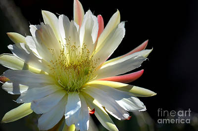 Photograph - Sun Splashed by Deb Halloran