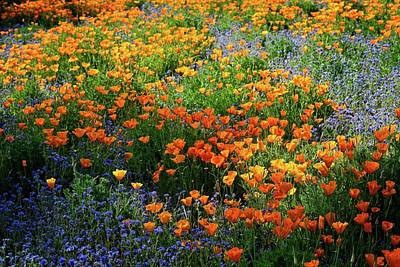 Photograph - Sun Splashed Wildflowers In The Artist's Palette Garden by Lynn Bauer