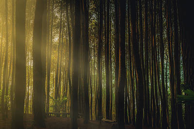 Jogjakarta Photograph - Sun Streaks Through The Pine Forests Of Indonesia by Erik Nuenighoff