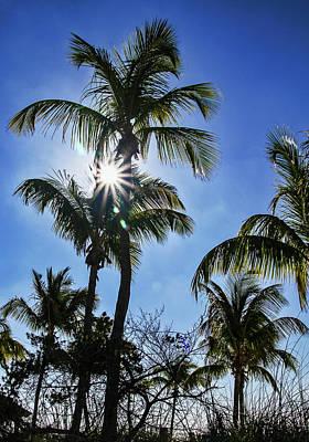 Photograph - Sun Through Smathers Beach Palms by Bob Slitzan