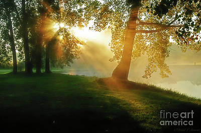 Photograph - Sun Through The Trees by David Arment